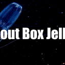 All about Box Jellyfish