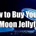 How to Buy Your First Moon Jellyfish